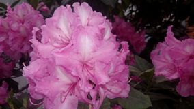 Flores Royalty Free Stock Photo