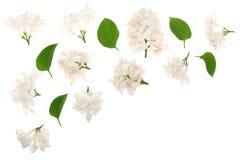 Flores, ramos claros e folhas lilás isolados no fundo branco com espaço da cópia para seu texto Configuração lisa Vista superior ilustração do vetor
