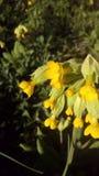 Flores reais amarelas no jardim imagens de stock