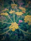 Flores reales 26 de las im?genes foto de archivo libre de regalías