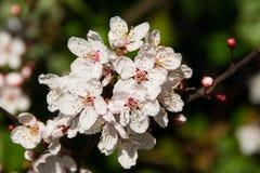 Flores recentemente florescidas. Imagens de Stock