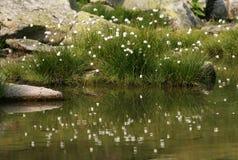 Flores refletindo Foto de Stock