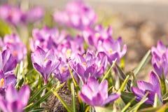 Flores ricas da mola Fotos de Stock Royalty Free