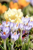 Flores ricas del resorte Foto de archivo libre de regalías