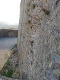 Flores, roca fotografía de archivo