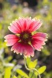 Flores rojas. Imágenes de archivo libres de regalías