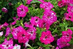 Flores Rojas Lizenzfreies Stockbild