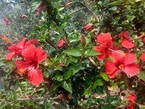 Flores rojas Foto de archivo