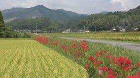 Flores rojas alineadas almacen de metraje de vídeo