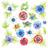 Flores rojas, azules, p?rpuras y blancas de la an?mona, de brotes y de hojas Sistema colorido Ilustraci?n de la acuarela fotografía de archivo