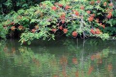 Flores rojas cerca del agua. Imágenes de archivo libres de regalías
