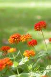 Flores rojas, color de proceso cruzado Fondo Foto de archivo libre de regalías
