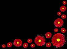 Flores rojas con el centro amarillo aislado en negro Foto de archivo libre de regalías