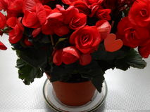 Flores rojas con el corazón rojo adentro Foto de archivo