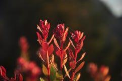 Flores rojas con el web de araña Foto de archivo libre de regalías