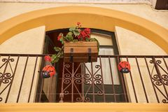 Flores rojas con los insectos rojos en un balcón de la vainilla Fotografía de archivo