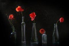 Flores rojas de la amapola Fotografía de archivo libre de regalías