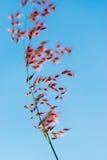 Flores rojas de la hierba imagen de archivo