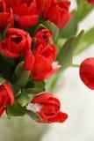 Flores rojas de la naturaleza de la primavera de los tulipanes Fotografía de archivo libre de regalías