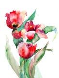 Flores rojas de los tulipanes Fotografía de archivo