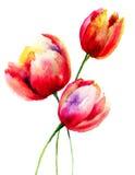 Flores rojas de los tulipanes Foto de archivo libre de regalías