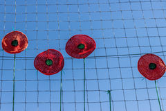 Flores rojas decorativas en la cerca Fotografía de archivo libre de regalías
