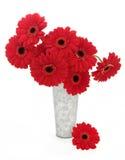 Flores rojas del Gerbera Fotografía de archivo libre de regalías