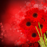 Flores rojas del gerbera Imagen de archivo libre de regalías