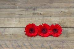 Flores rojas del gerbera Imagenes de archivo
