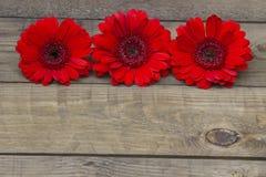 Flores rojas del gerbera Fotografía de archivo