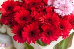 Flores rojas del Gerbera en el mercado de la flor de Amsterdam Foto de archivo