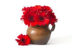 Flores rojas del gerbera en un florero Fotos de archivo libres de regalías