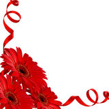 Flores rojas del gerbera en una esquina Fotografía de archivo