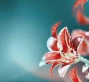 Flores rojas del lirio en el fondo borroso de la turquesa Frontera floral rosada Imagenes de archivo