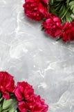 Flores rojas del peony Foto de archivo