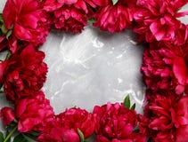 Flores rojas del peony Imagenes de archivo