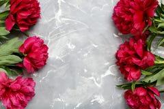 Flores rojas del peony Fotos de archivo