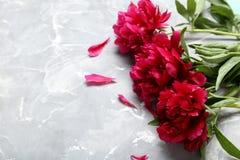 Flores rojas del peony Fotografía de archivo