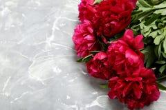 Flores rojas del peony Imagen de archivo