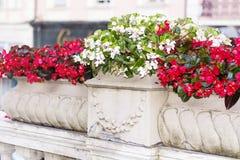 Flores rojas del pote en la calle Imágenes de archivo libres de regalías
