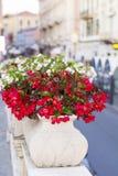 Flores rojas del pote en la calle Imagen de archivo libre de regalías