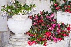 Flores rojas del pote para la decoración de la calle Imagen de archivo libre de regalías