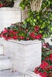 Flores rojas del pote para la decoración de la calle Imágenes de archivo libres de regalías