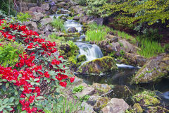 Flores rojas del rododendro y una cascada Imágenes de archivo libres de regalías