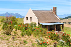 Flores rojas delante de la casa africana del winefarm fotos de archivo libres de regalías