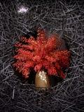 Flores rojas en abrigo Fotos de archivo libres de regalías
