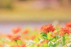 Flores rojas en el campo del jardín, fondo Imágenes de archivo libres de regalías