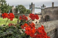 Flores rojas en el fondo del puente de la torre Foto de archivo libre de regalías