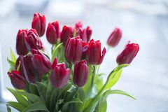 Flores rojas en florero en la ventana Fotos de archivo libres de regalías