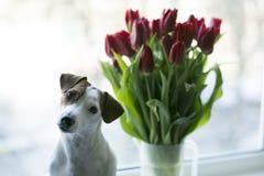 Flores rojas en florero y perro en la ventana Imagen de archivo libre de regalías